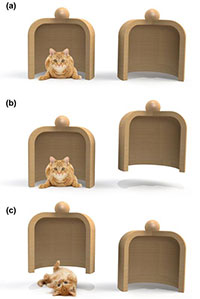 Images showing the cat-in-a-container null measurement protocol